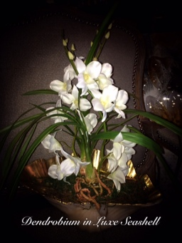 Dendrobium in Luxe Seashell